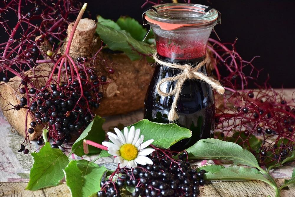 Black Elderberry Benefits, Uses & History